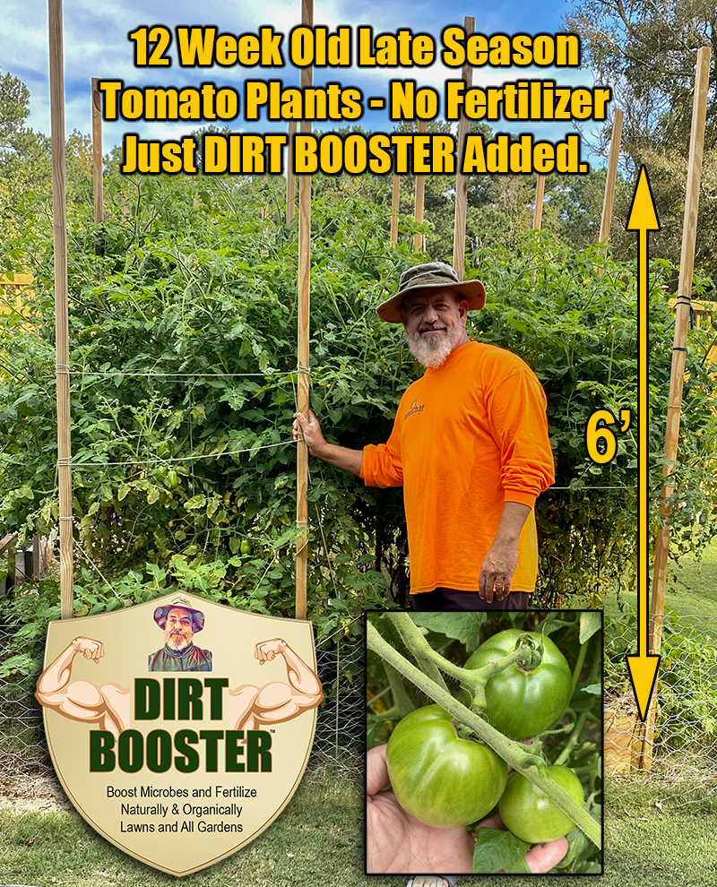 dirt booster tomatoes
